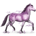 vzácný kůň ametyst