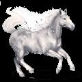 vzácný kůň diamant