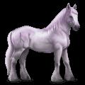 božský kůň grani