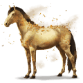 vzácný kůň gypse