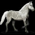 kůň ze sluneční soustavy merkur
