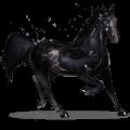 vzácný kůň onyx