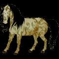 speciální kůň ouranos