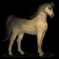 kůň ze sluneční soustavy venuše