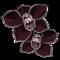 orchidee-noire.png?1097526923